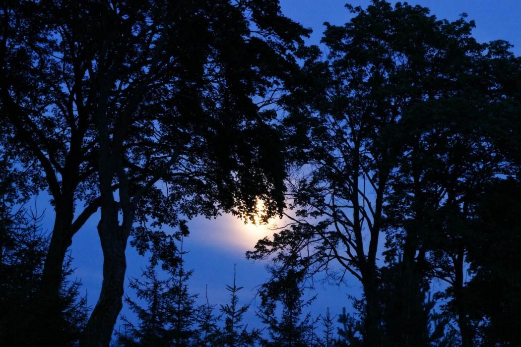 noc w Borach Tucholskich
