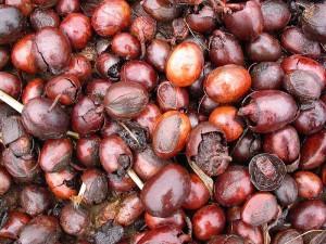 orzechy masłosza - Wikipedia