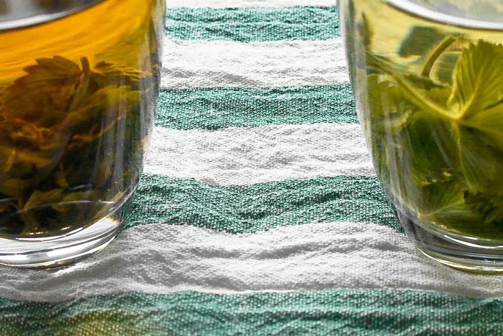 Z lewej strony herbata poziomkowa fermentowana, z lewej niefermentowana