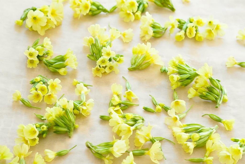 Rozkładam kwiaty na papierze lub bawełnie, suszę bez dostępu światła