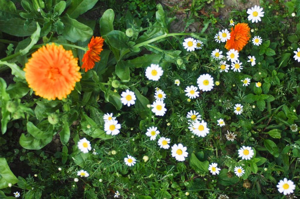 zioła dla kobiet w okresie menopauzy