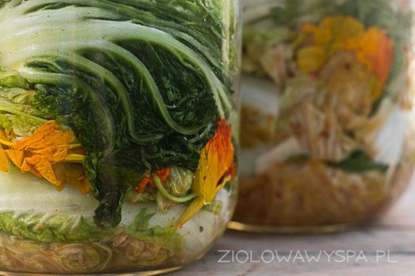 kimchi z ziołami