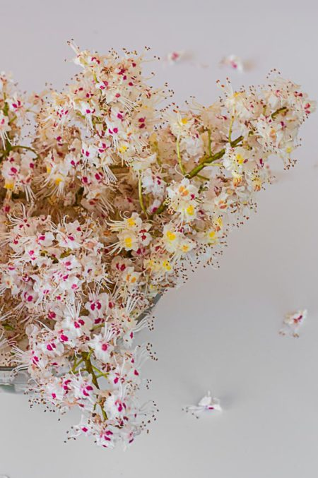 каштановые цветы