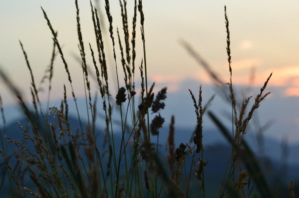 trawy2