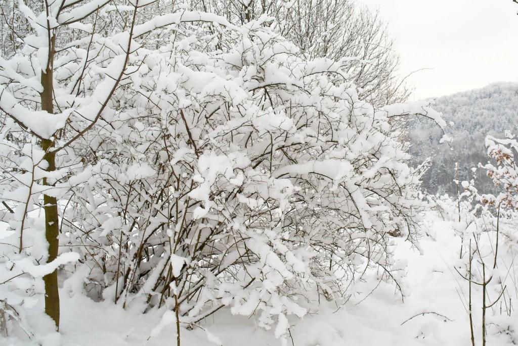 Głóg w śniegu i widok na Worecznik