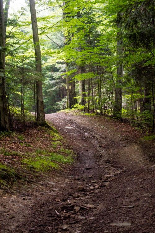 las mrok swiatlo